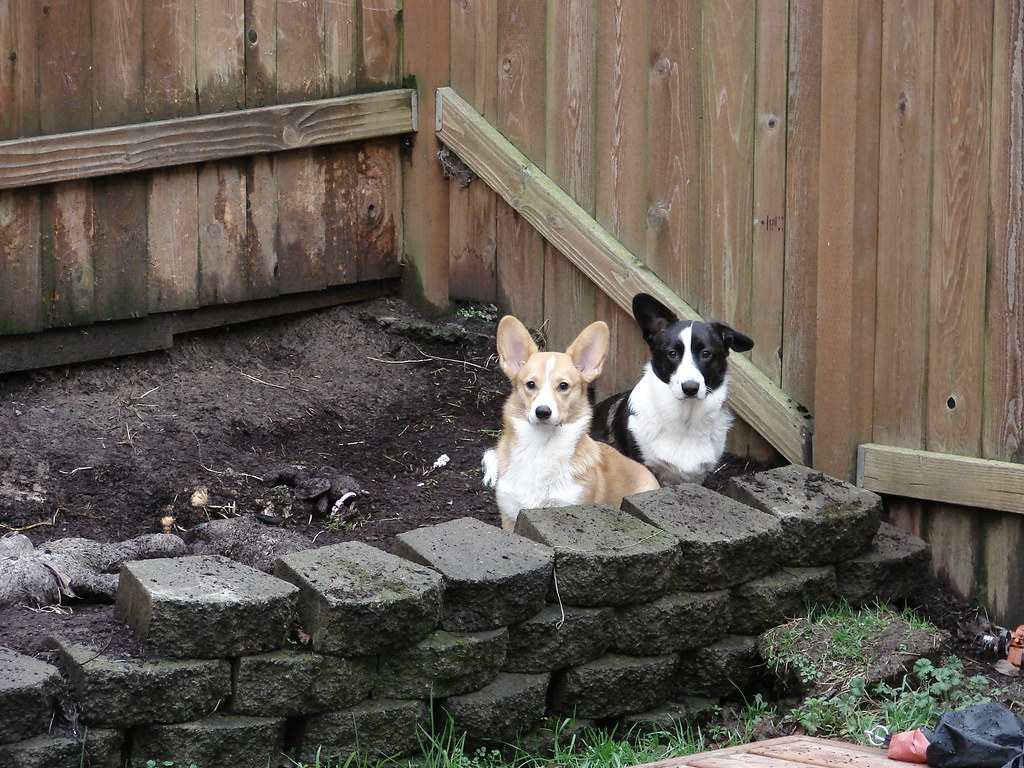 Zoey & Roxy
