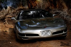 between trees2 (MadVette) Tags: tree 1999 427 kuwait mad corvette berserk q8 mti   kuwaitartphoto madvette