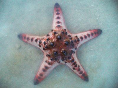 Seastar-P1060655