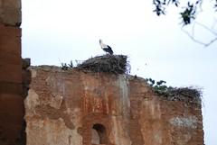 DSC_0344.JPG (tenguins) Tags: africa ruins arabic morocco berber rabat chelle siteseeing chella romanruins