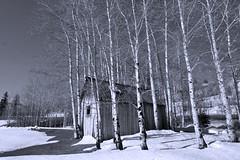 Cabin (rebel-gm) Tags: trees snow cabin birch