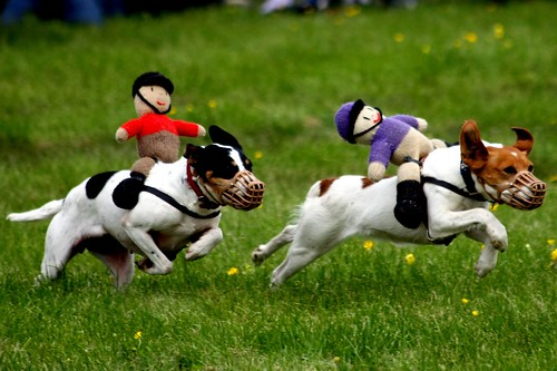 Racing Terriers by garryknight, on Flickr