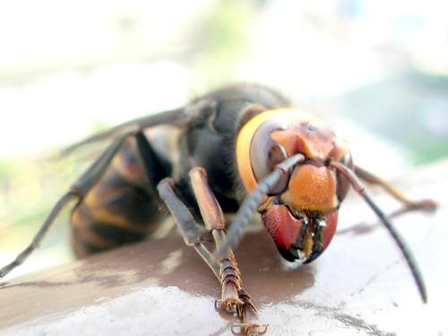 【悲惨】50分もスズメバチに襲われ死亡!まとめ。