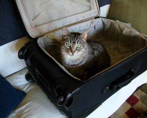 Cat in the Suitcase
