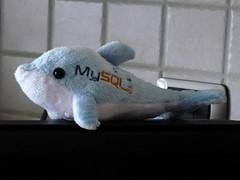 Delfino MySQL