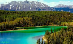 Emerald Beauty (Ken Yuel) Tags: trees canada mountains water beauty lakes yukon wilderness emeralds blueribbonwinner supershot outstandingshots passionphotography golddragon top20travel goldstaraward internationalgeographic digitalagent emeraldlakeyukon natureswarehouse