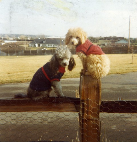 Smokey and young Carmel sitting on the fence in their sweaters - sometime in 1975