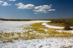 Dry Portion of Soda Lake 04 09 10 (Rob DeGraff) Tags: california wildflowers droh dailyrayofhope