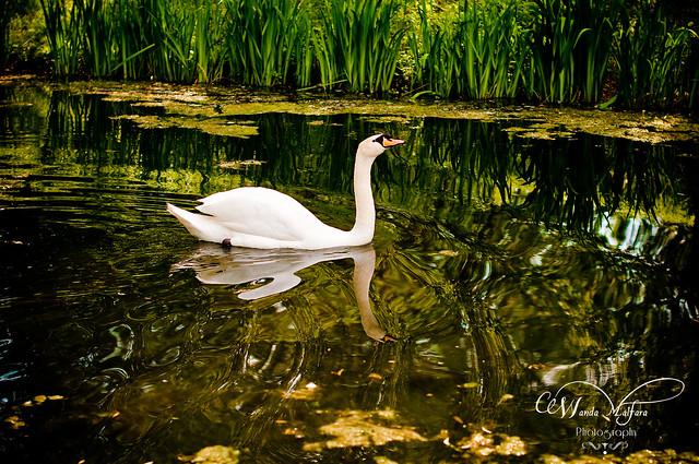PhSho Park Dahlia 215 blog