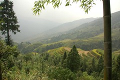 DSC_3383 (Drnantu) Tags: field guilin  terraced longshen    longgi