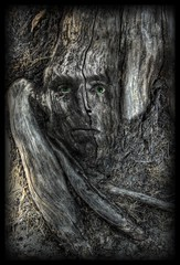 Engrained (Josh Sommers) Tags: wood tree texture face wooden roots manipulation bark stump metamorphosis weekendamerica abigfave