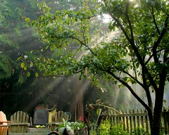 Blessings... (Starlisa) Tags: friends light sun tree green beauty garden blessings joy memories explore porttownsend rays lovelovelove washingtonstate sorrow soe globalvillage oct16 278 blueribbonwinner flickrsbest mywinners impressedbeauty starlisa firsttheearth ljomi img11961