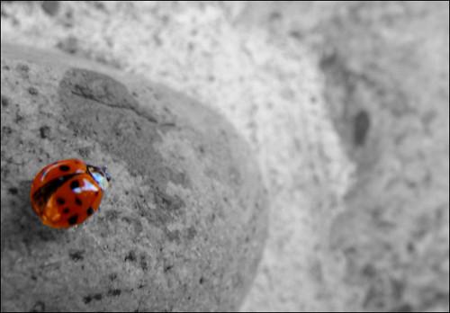 Ladybug-II