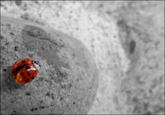 macro insect cd ladybug coccinelle (Photo: Etolane on Flickr)