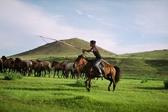 Horses at wake up - Horses guardian (Jeff Bauche._.)) Tags: voyage travel portrait horses people horse jeff nature face trekking trek landscape photography travels asia natural kodak retrato portrt mongolia roll paysage gaia portret portra ritratto portrat voyages mongol mongolie mongolian galope blueribbonwinner bauche aplusphoto flickrdiamond mongoliancountryside mongolianlandscape worldpicture theunforgettablepictures naturewatcher excapture jeffbauche jeanfranoisbauche jeffbauche jeffbauchehotmailcom
