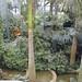 Jardín Botánico de Singapur_6