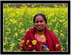 Sarson ke khet mein... (shubhangi athalye) Tags: flowers india up yellow rural village fields mustard sarson