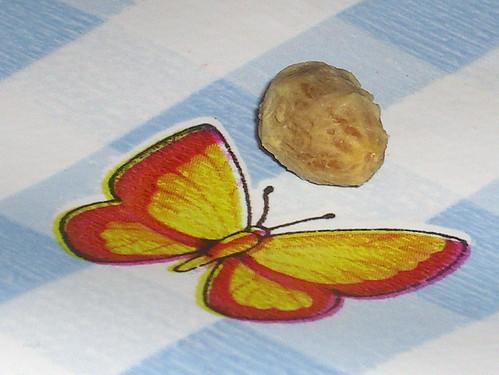 Olive pit butterfly