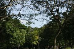 Trees in lalbagh (Swami Stream) Tags: india gardens canon landscape botanical rebel bangalore images karnataka swami lalbagh swaminathan karntaka banaglore bengaluru xti 400d swamistream swamistreamcom