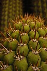 Espinas3 (V for Valium) Tags: sunset cactus sun sol cacti needle spike thorns vacaciones agujas espinas