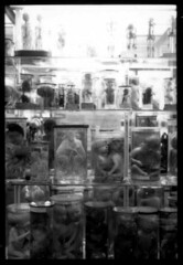 Wunderkammer (Prof. Jas. Mundie) Tags: blackandwhite bw paris france film glass monochrome monster museum contrast analog 35mm kodak tmax monochromatic medical health freak 35mmfilm anatomy fetus medi