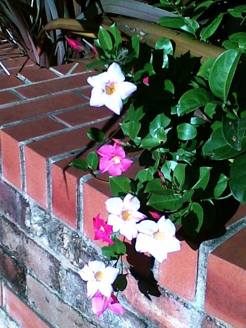 flowers near my home
