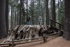 20080504 The Big Stump