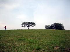 Penggambaran kawasan ladang (Abd Hadi) Tags: canon malaysia upm oth ixus55
