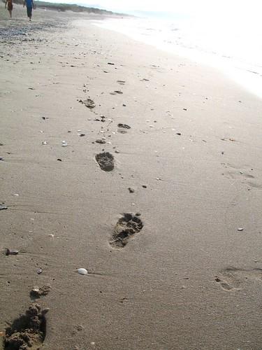 Caminante, son tus huellas el camino