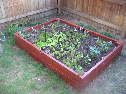 All Good to Grow...Yum Veggies!