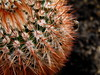 Cactus (Claire Brownlow) Tags: cactus plant macro cacti spiky bokeh small indoor olympus celebration soil camedia c765 765 thechallengefactory clairebrownlow