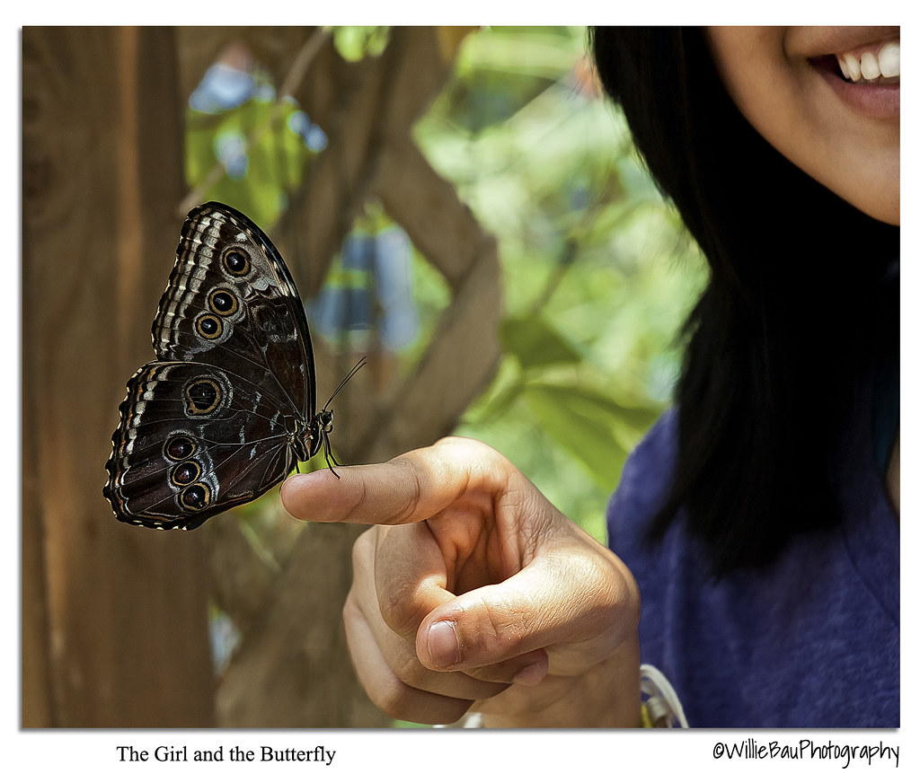 The Girl and the Butterfly.