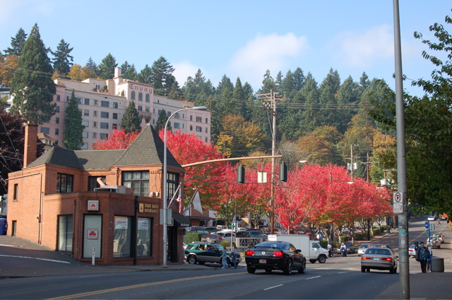 corner_23rd_burnside_red_trees
