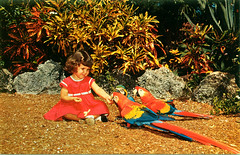 Girl feeding parrots, Parrot Jungle, Florida, 1950s