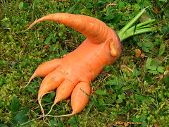 It's a foot...It's a hand....It's a (clickclique) Tags: orange halloween garden foot funny hand oneofakind carrot canons3is blueribbonphotography colourmyworldorange