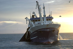 Finnur Fri (hlynzi) Tags: fish fishing trawler herring finnur fishingship fiskur freyjar lona capelin kolmunni svartkjaftur uppsjvarveii uppsjvarveiiskip brsla uppsjvarfiskur sld lndun discharing fri lonu nt