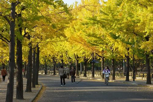 Osaka Castle Trees
