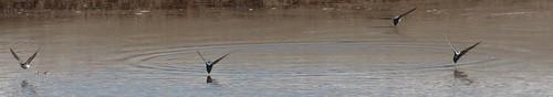 close up martin skimming