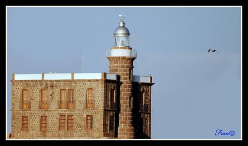 Faro y gaviota