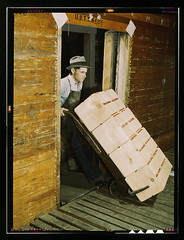 Loading oranges into refrigerator car at a co-...