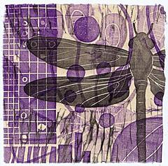Jazzy Dragonfly