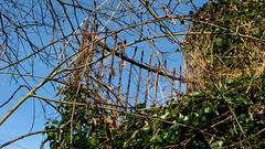 Overgrown old fencing (R/DV/RS) Tags: greatbritain england fence europe unitedkingdom britain fencing railing wirral westkirby merseyside thewirral