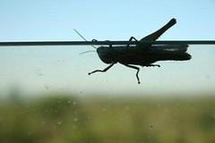 langosta (Analía Acerbo Arte) Tags: tarde vidrio langosta