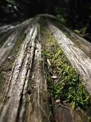 felled w/moss