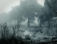 Horse In Winter Field (Darwin70) Tags: trees winter horse mist field silhouette fog mono frost branches commons frosty eerie spooky creativecommons duotone