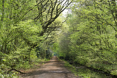 Springtime in the Woods (Theresa Elvin) Tags: trees england green spring woods yorkshire doncaster southyorkshire theunforgettablepictures sandallbeatwoods