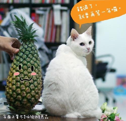 20080513鳳梨_005