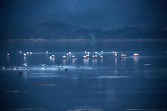 Luce d'acciaio (swaily ◘ Claudio Parente) Tags: maremma maremmans toscana tuscany argentario orbetello uccelli birds swaily claudioparene nikon