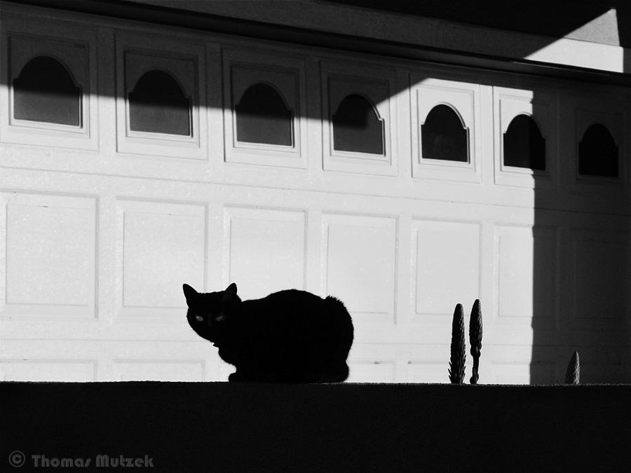 Cat, Pacifica, California, December 2009