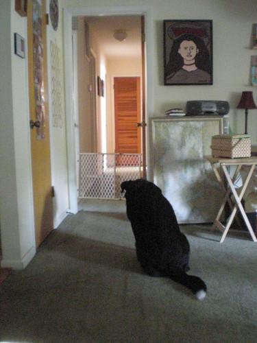 Sukey waiting for Angie to wake up
